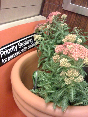 yarrow_onthe_nyc_subway