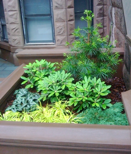 brooklyn_evergreens_brownstone