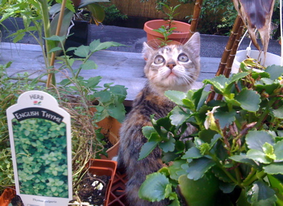 nico_roofgarden_cat