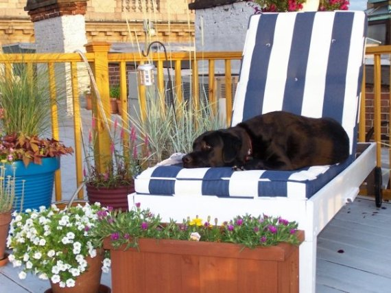 wm_roofgarden_dog_1