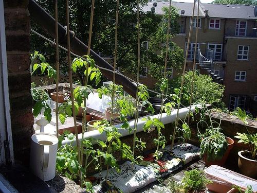 Rooftop Vegetable Gardens : London Rooftop Vegetable Garden  Brooklyn Roof Garden