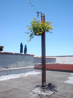 pole_eyesore_roofgarden_lantana