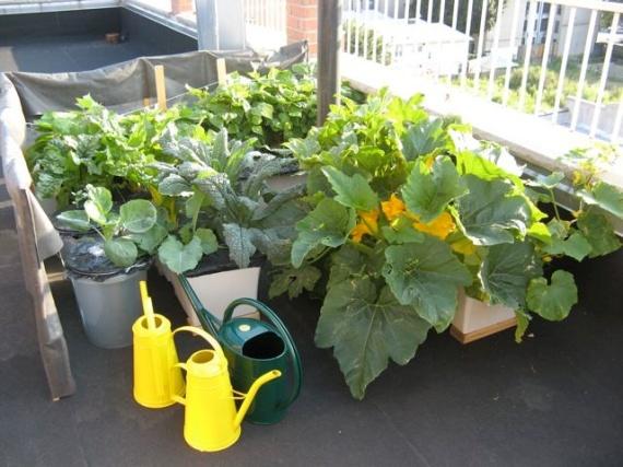 terrace_vegetable_garden_brooklyn