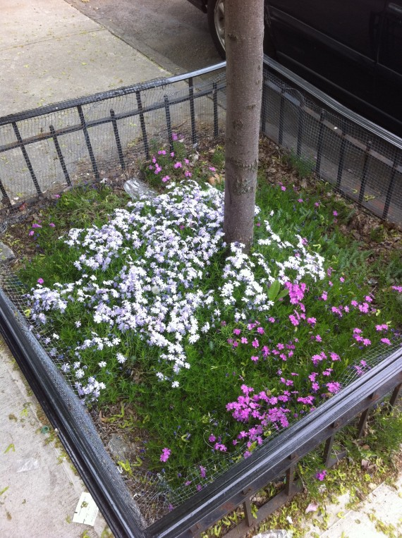Brooklyn Flowers Plants Tree Pit